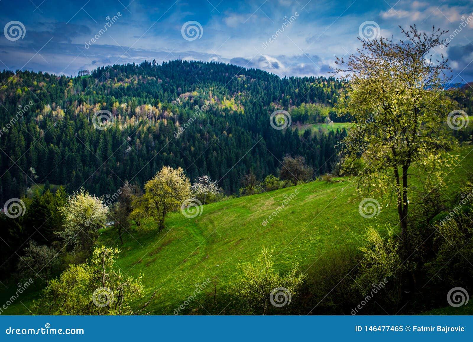 一个非常好春日 美丽的春天风景和天空蔚蓝的看法在背景中