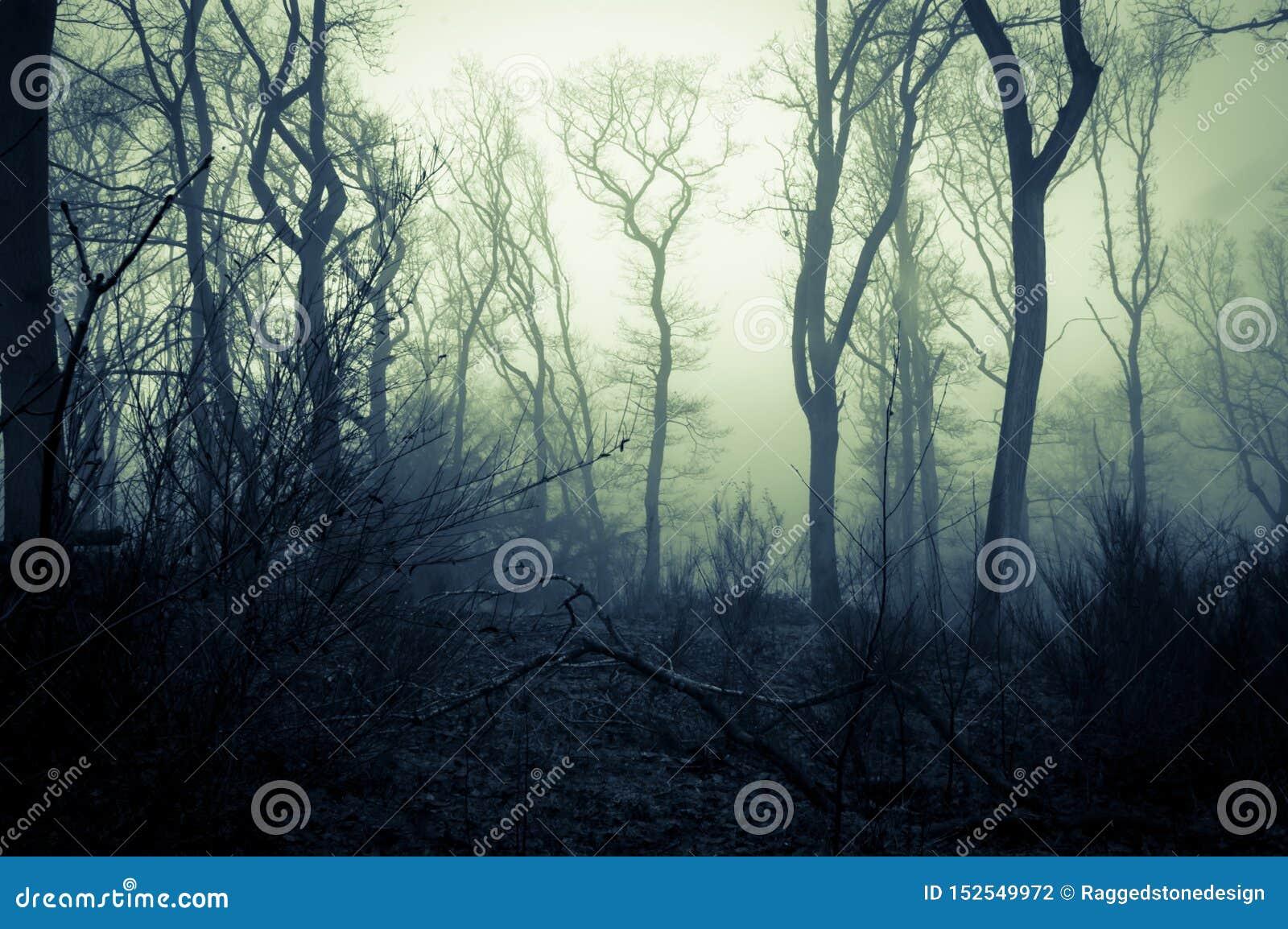 一个鬼的森林在一有薄雾的天在冬天,与发光的令人毛骨悚然的天空 可怕的蓝绿色编辑