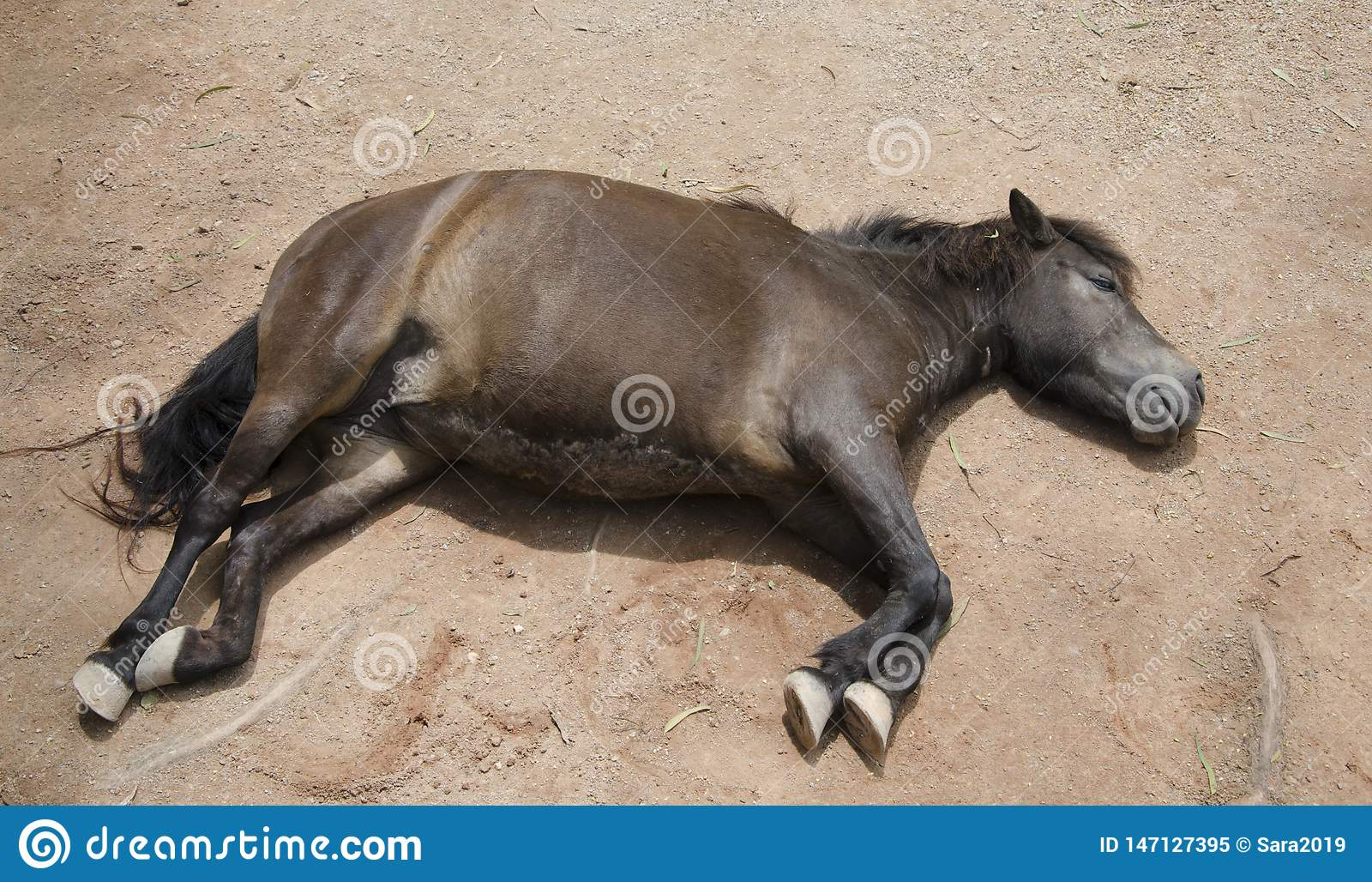 一匹休息的马