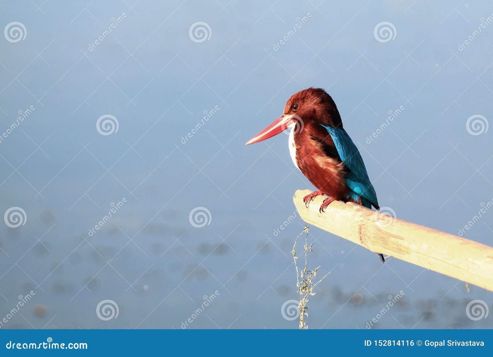 一只五颜六色和美丽的鸟