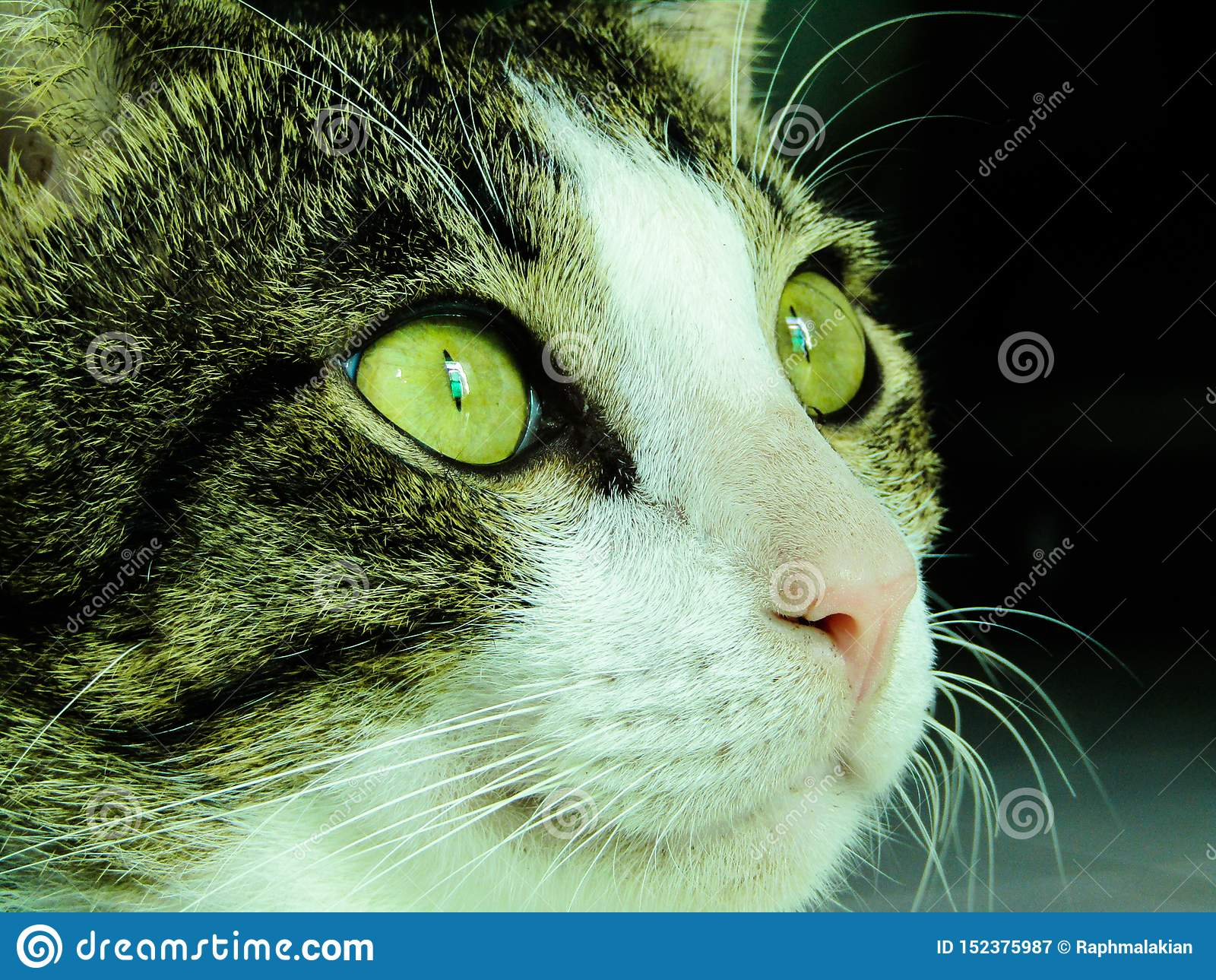 一只家猫的急剧注视