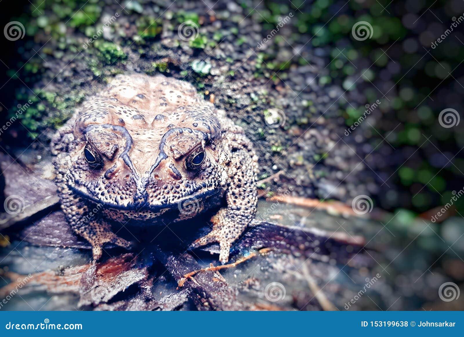 一只懒惰青蛙坐玻璃和木头