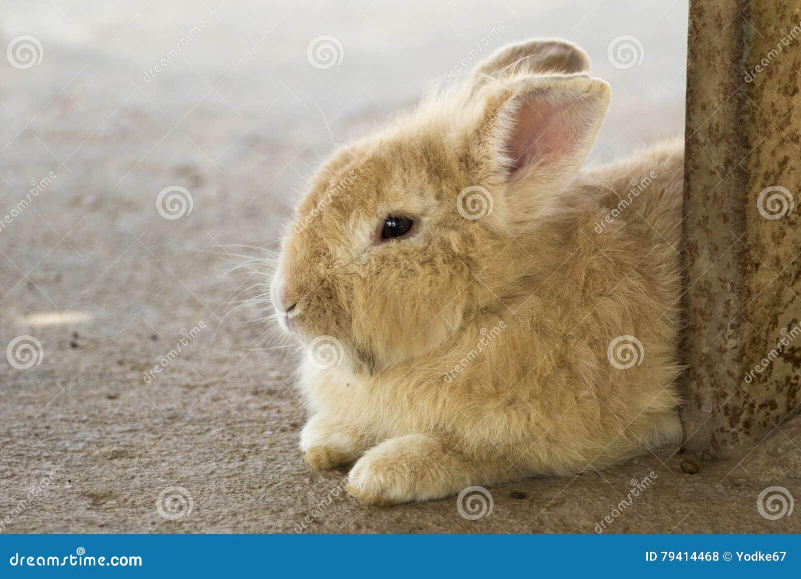 一只棕色兔子的图象