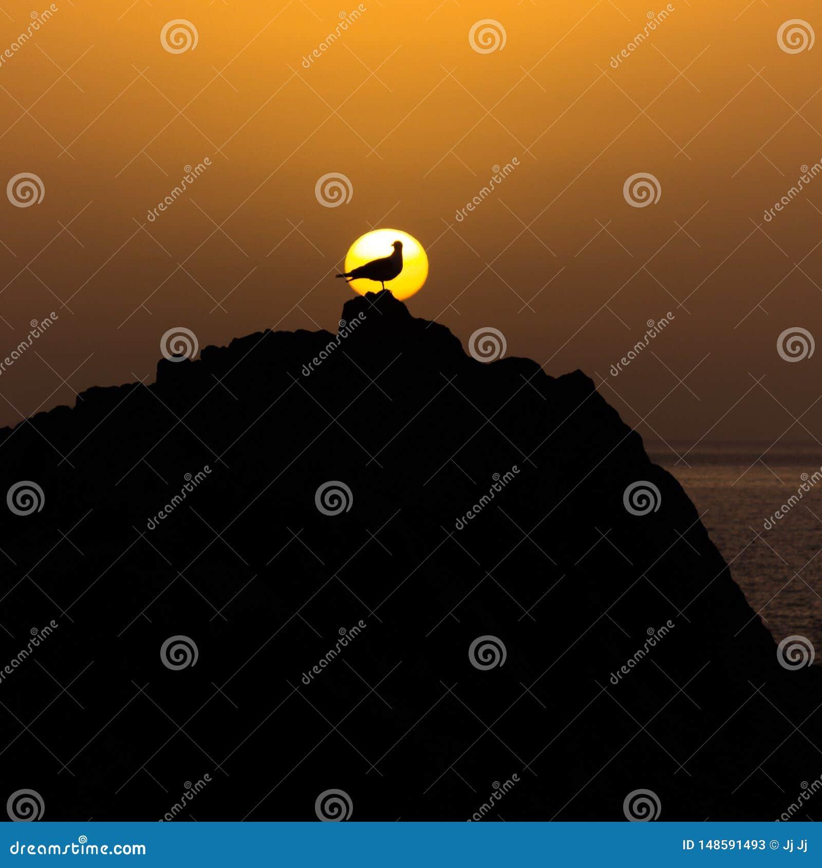 一只海鸥的形状在太阳前面的