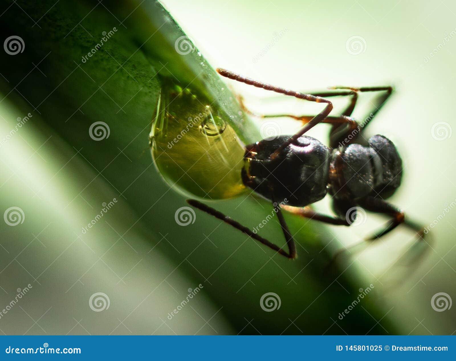 一只蚂蚁在我的庭院里
