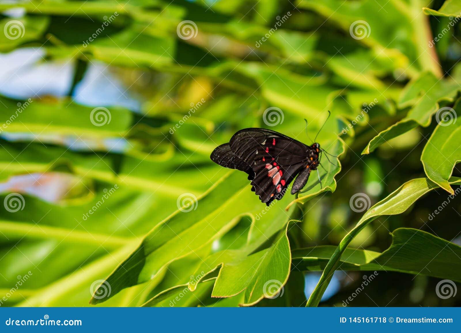 在一片绿色叶子的蝴蝶