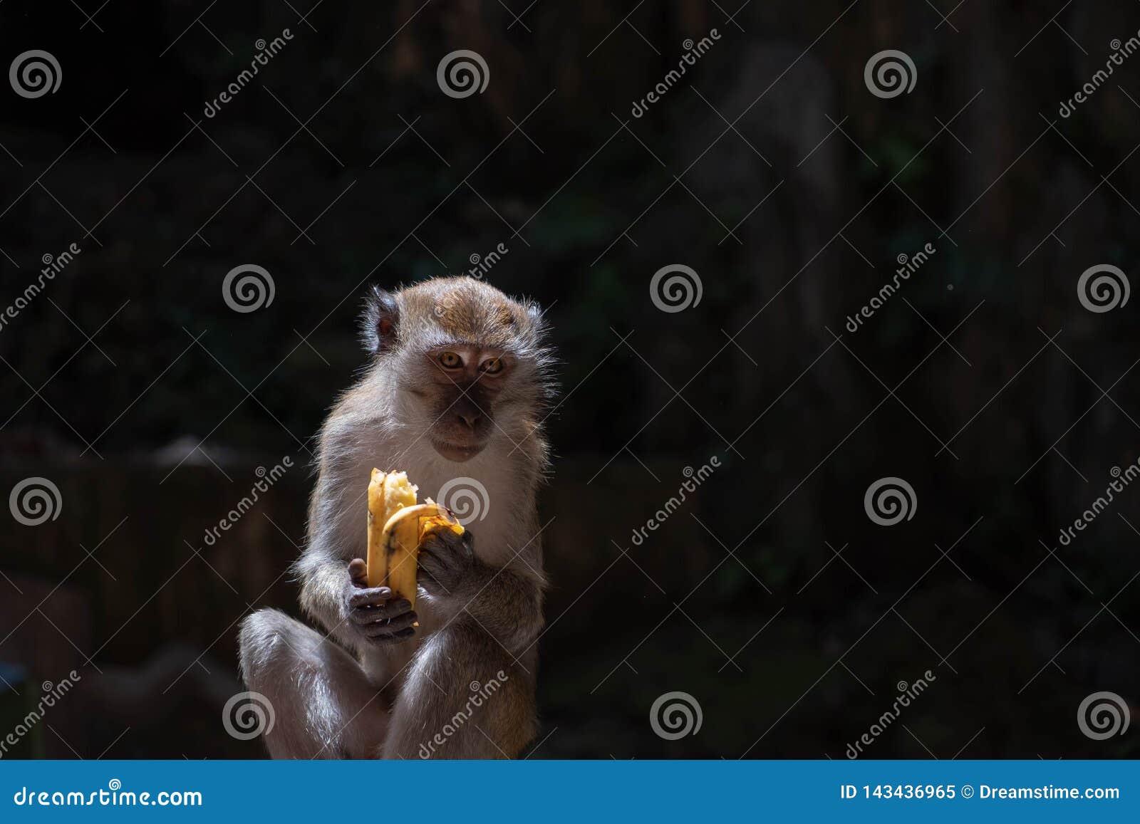 一只饥饿的猴子