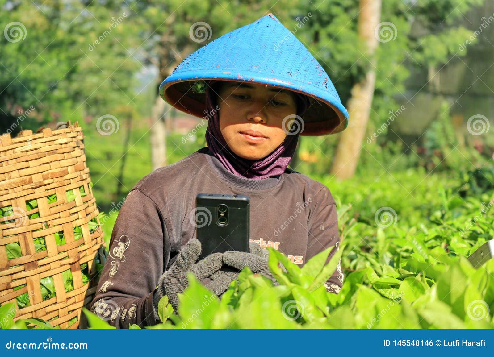 一名女工在茶园