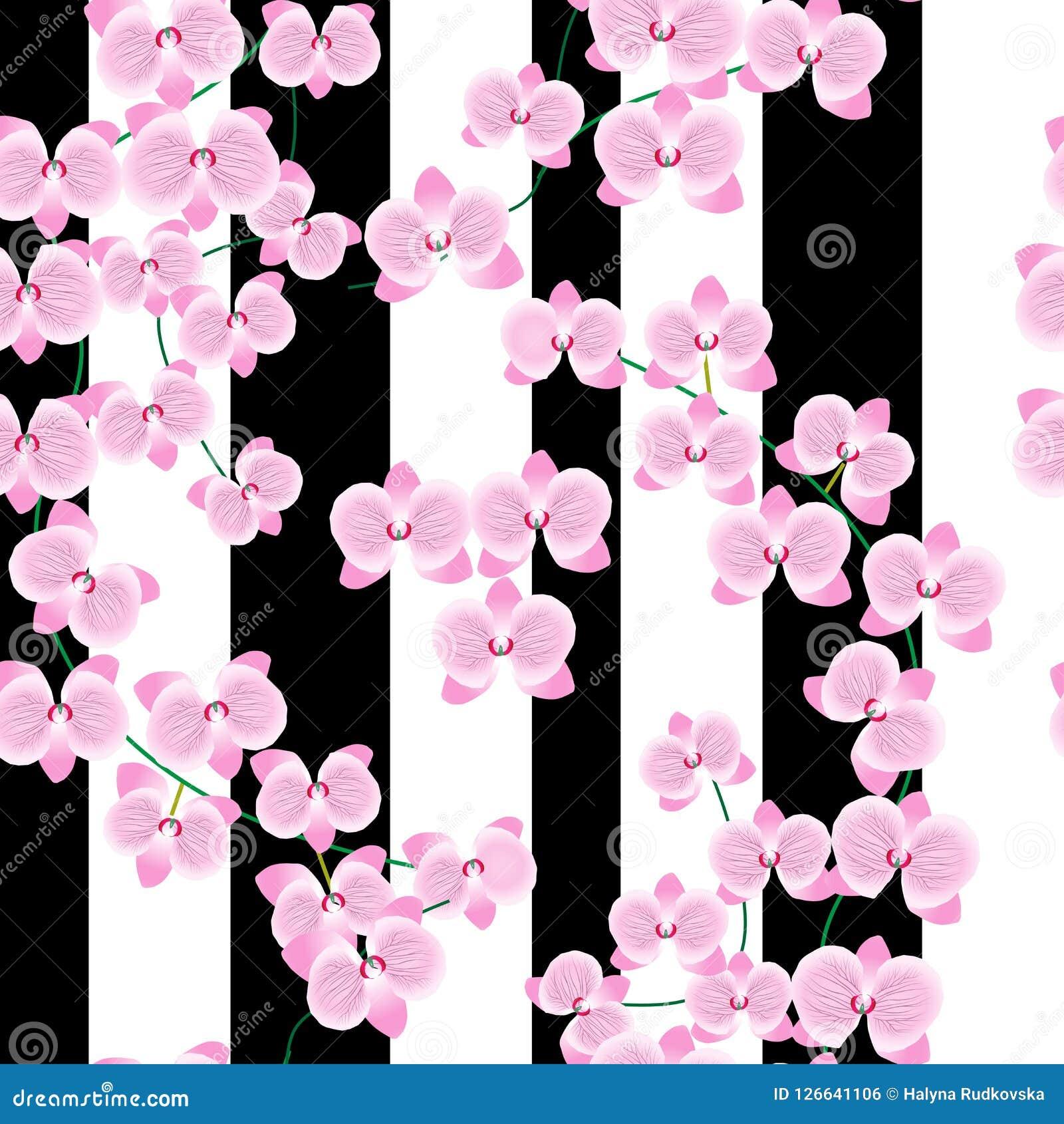 一朵美丽的桃红色兰花的分支在轻的背景的与宽淡紫色条纹 无缝的模式