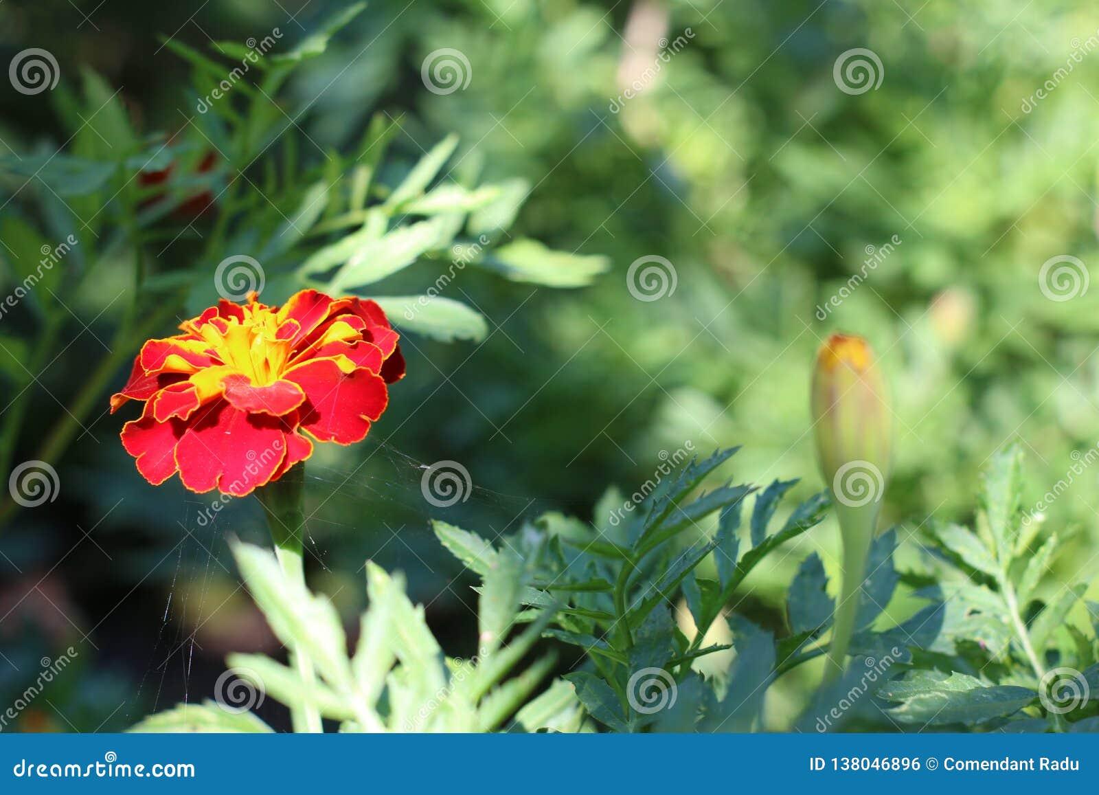 一朵美丽的花在阳光下
