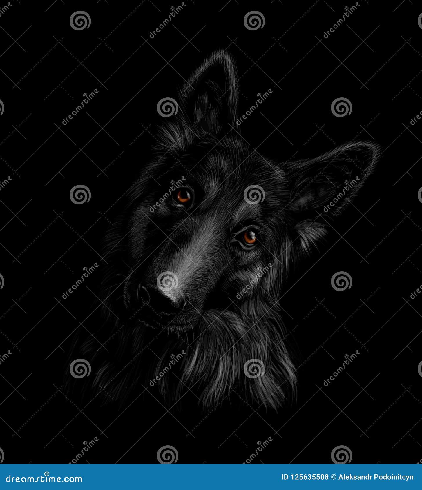 一条德国牧羊犬狗的画象在黑背景的