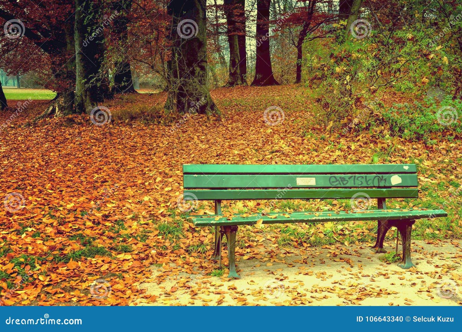 一条浪漫绿色长凳秋天中
