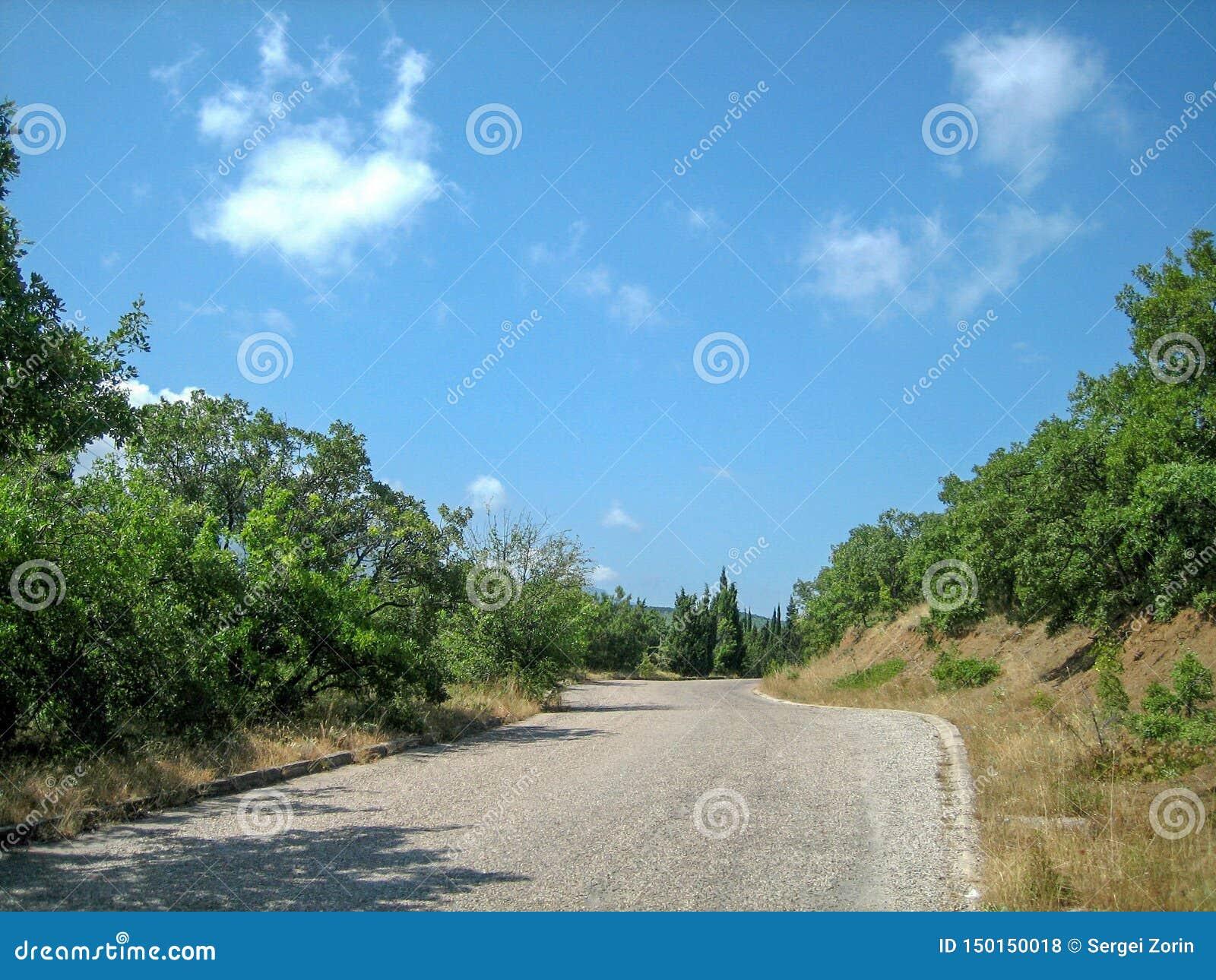 一条狭窄的柏油路在通过常青树和太阳被烧焦的草的一热的好日子