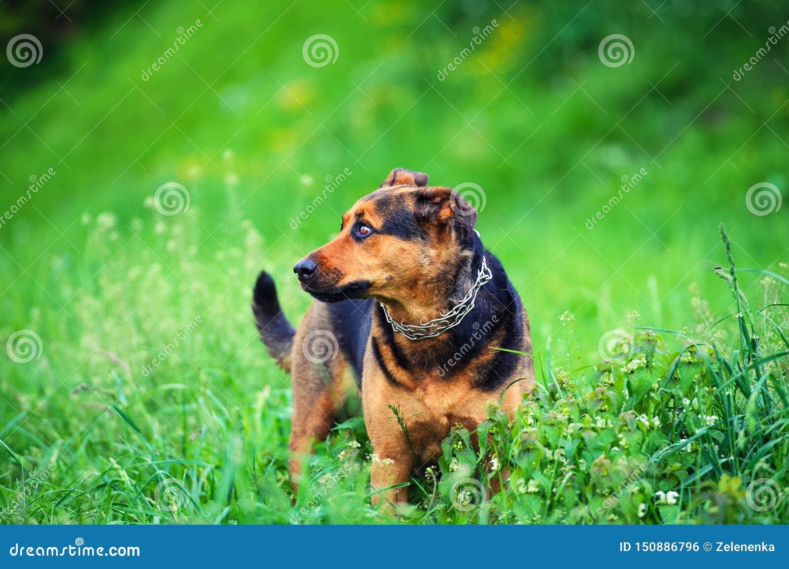 一条美丽的狗的画象