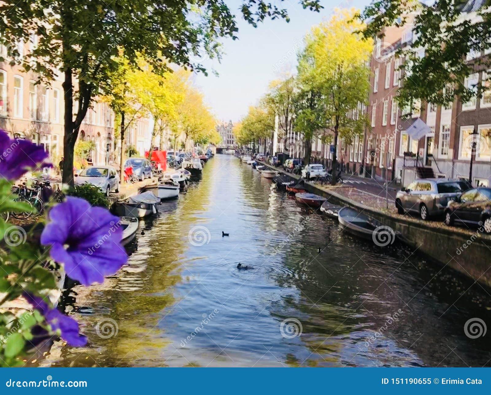 一条运河的看法在阿姆斯特丹,荷兰