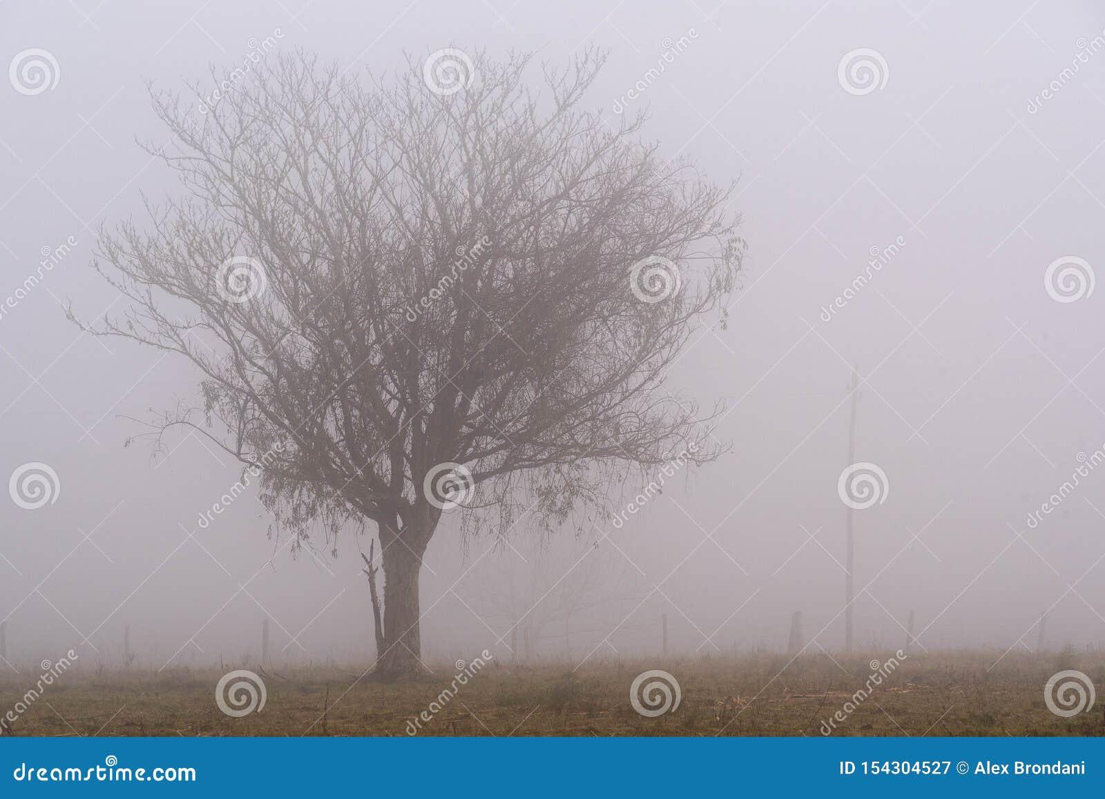 一根树路灯柱的剪影在雾中的
