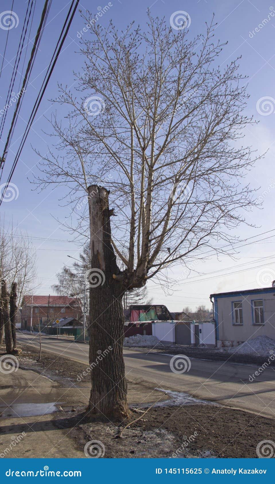 一棵奇怪地树