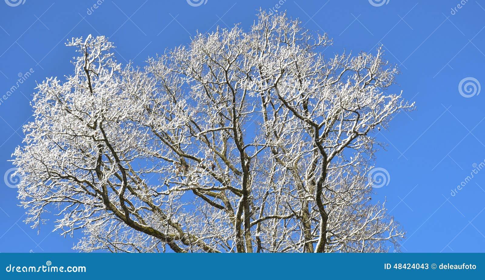 一棵树的囹�a_一棵树的上面与雪的