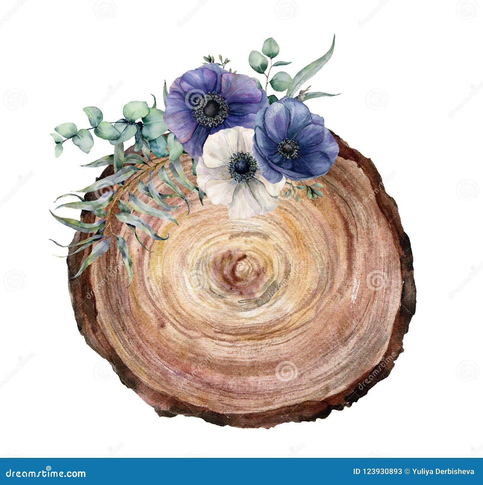 一棵树的水彩横断面与蓝色和白色银莲花属花束的 手画花和eucaliptus叶子