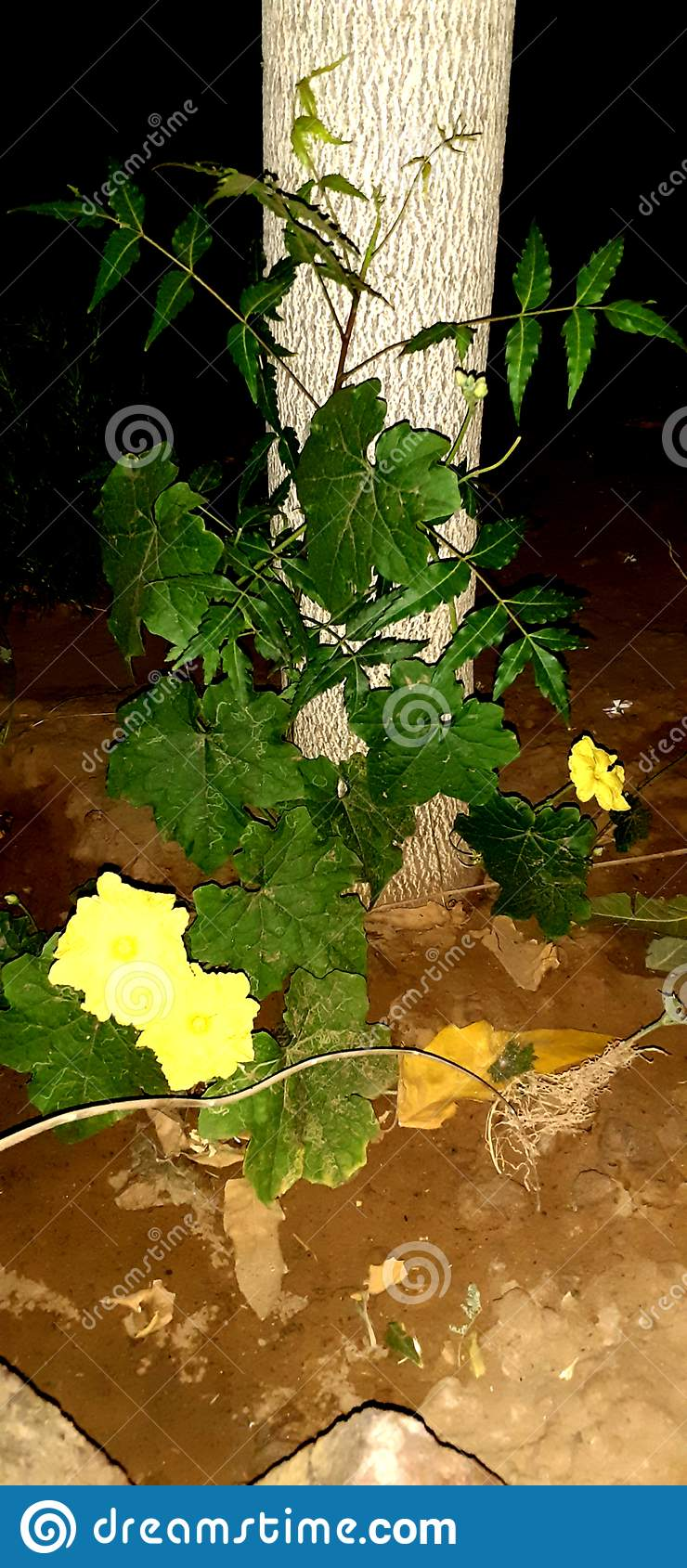 一棵花植物在夜