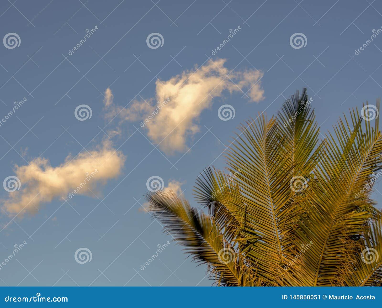 一点在棕榈树的白色云彩