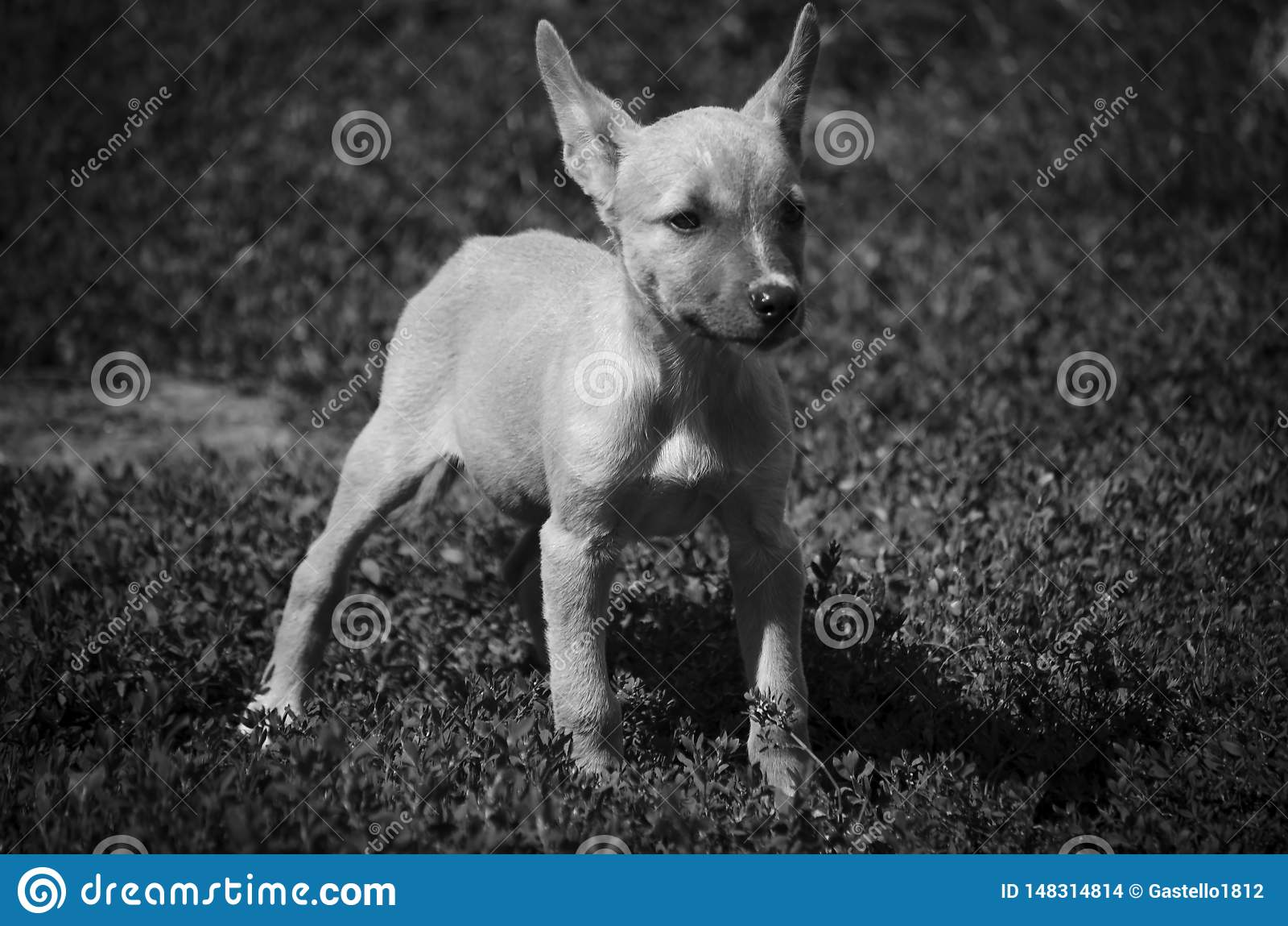 一点小狗在动物庇护所中