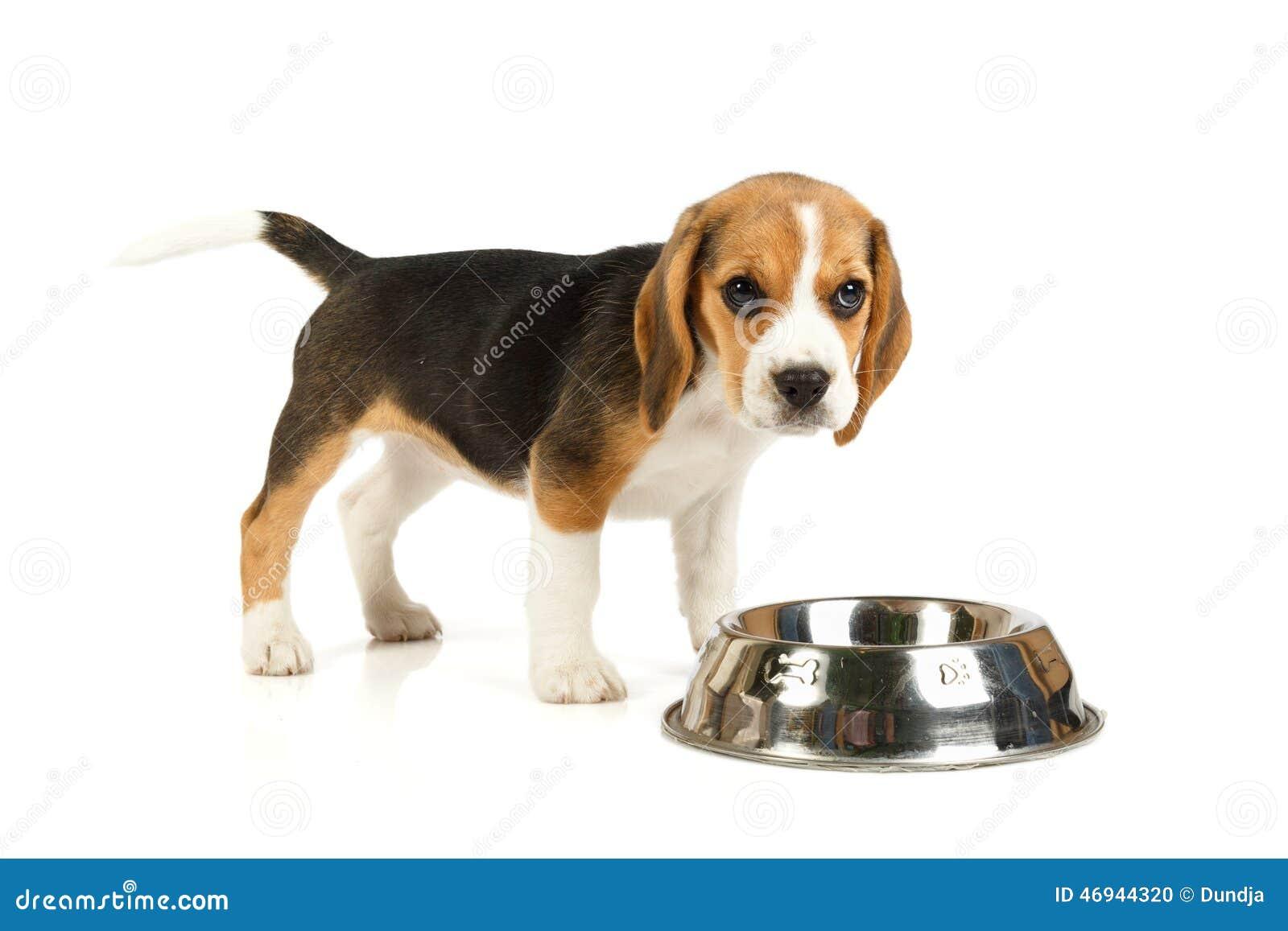 一点逗人喜爱狗吃