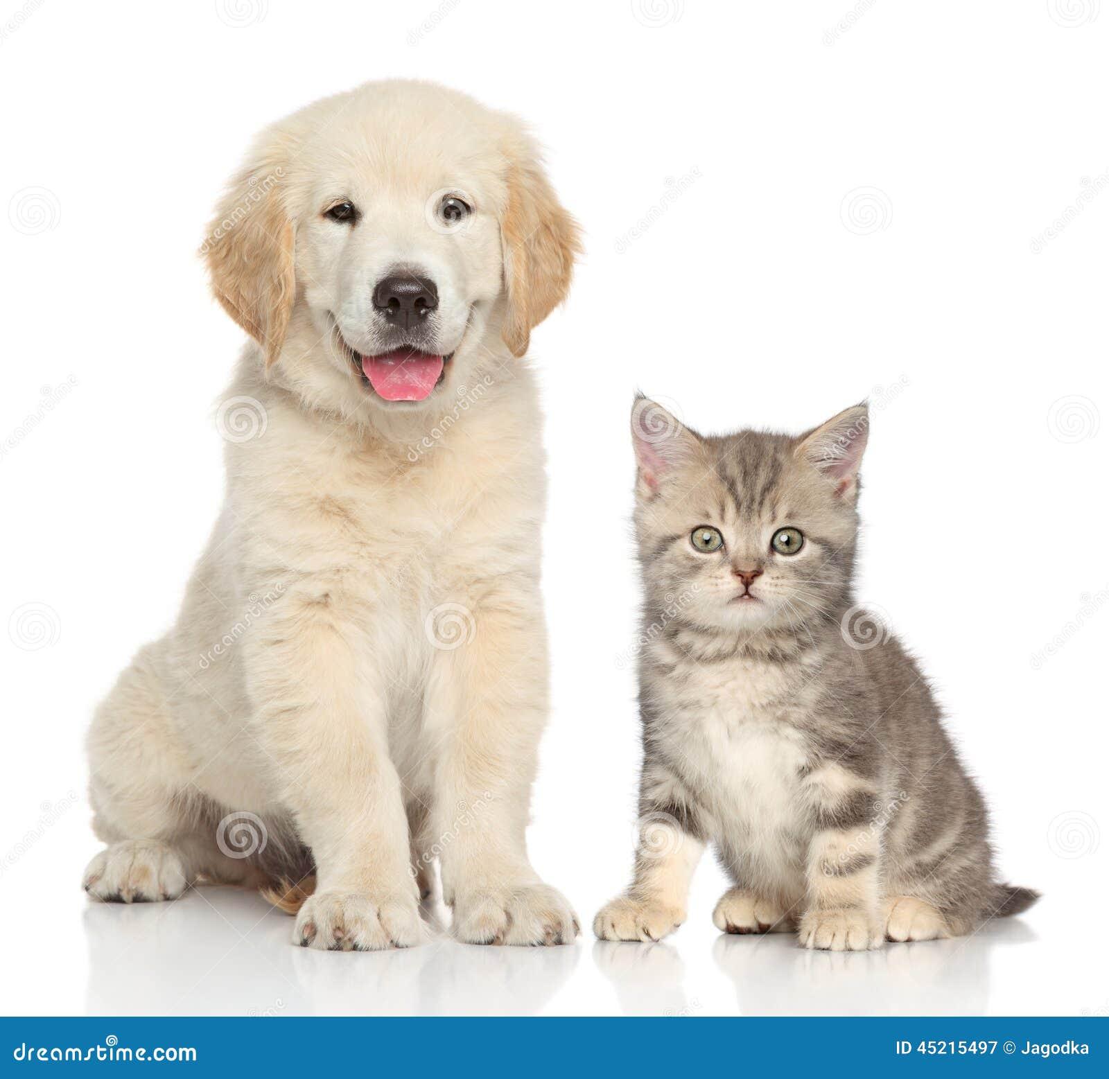 小色狗和猫交配_一起猫狗库存图片.图片包括有空白,宠物,户内,小狗,敌意