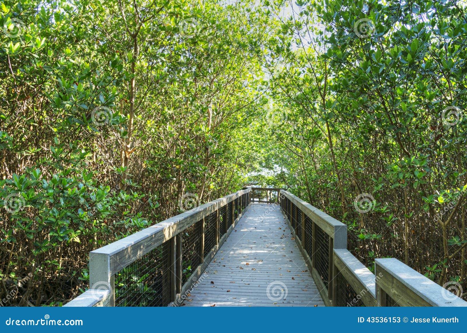 丁亲爱的自然保护区的木板走道