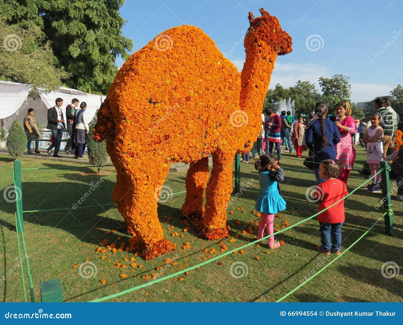 万寿菊在罗斯节日,昌迪加尔的花艺术
