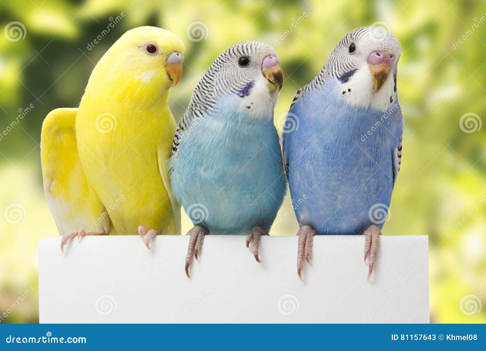 三只鸟在白色背景