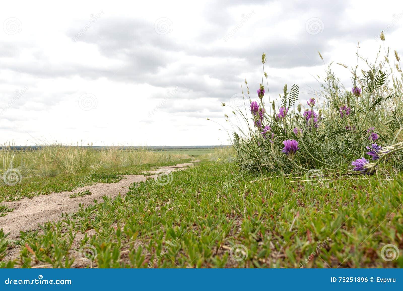 三叶草增长在领域路的边缘