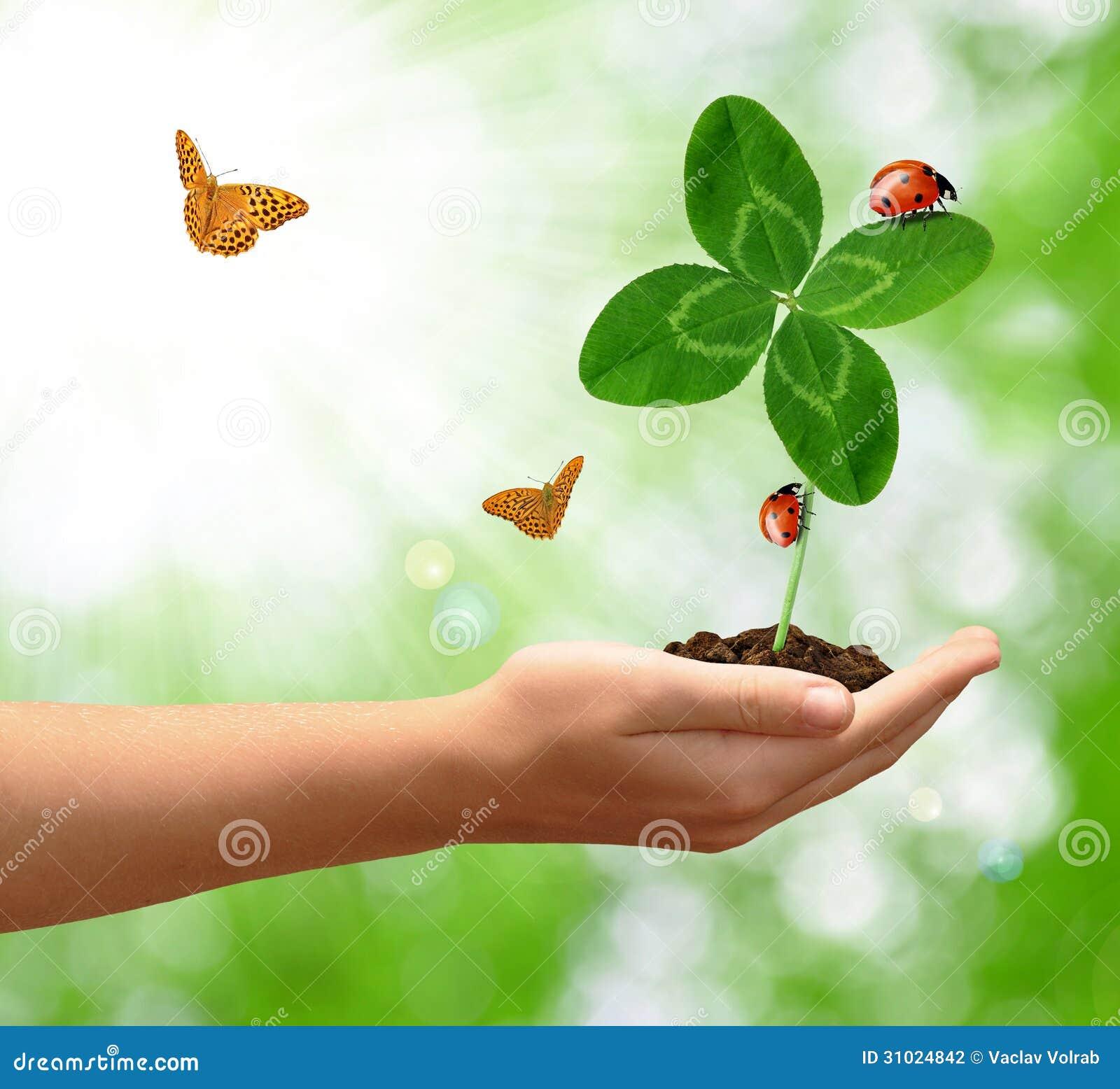 与瓢虫和蝴蝶的三叶草quarterfoil在手中.图片