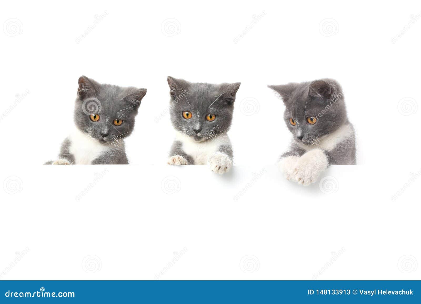 三在白色背景隔绝的猫