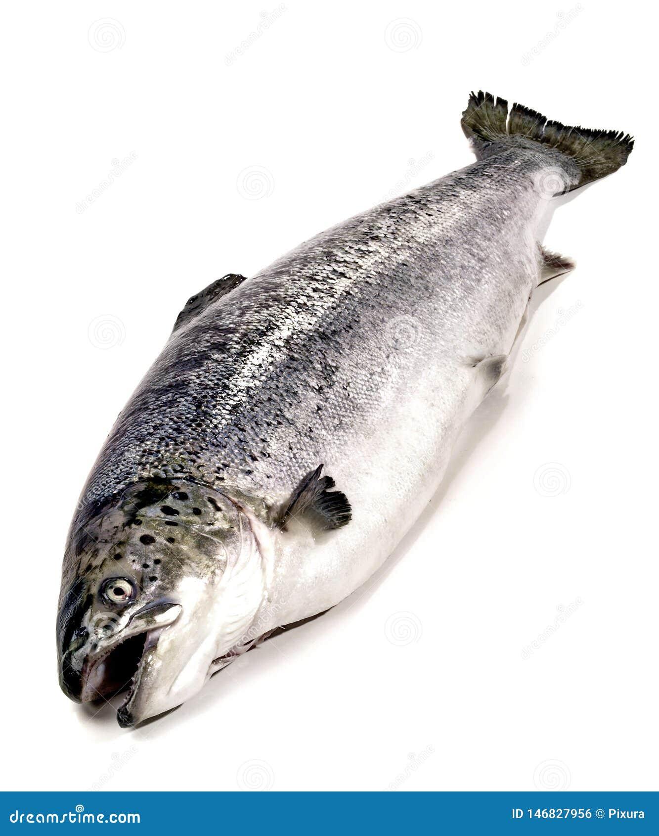 三文鱼-整个鱼