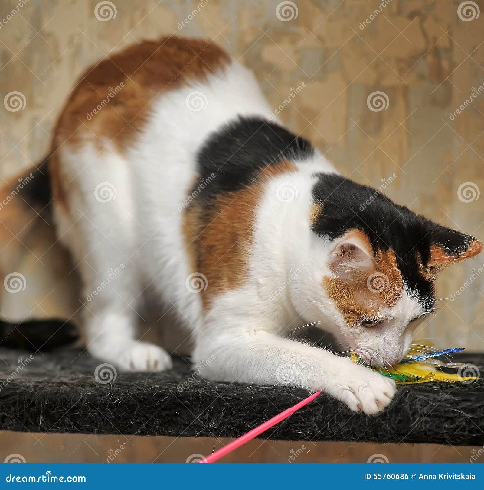 三色猫_三色猫使用