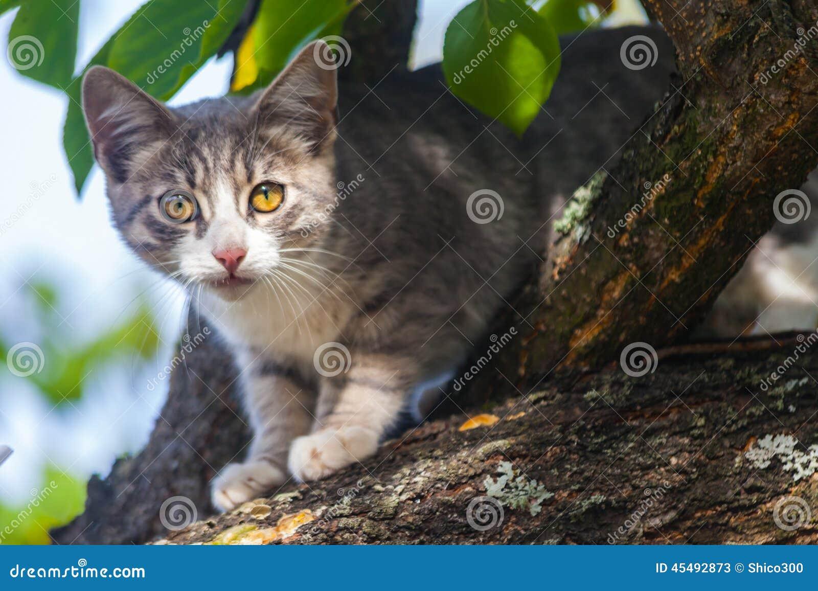 上升下来从树的美丽的灰色虎斑猫