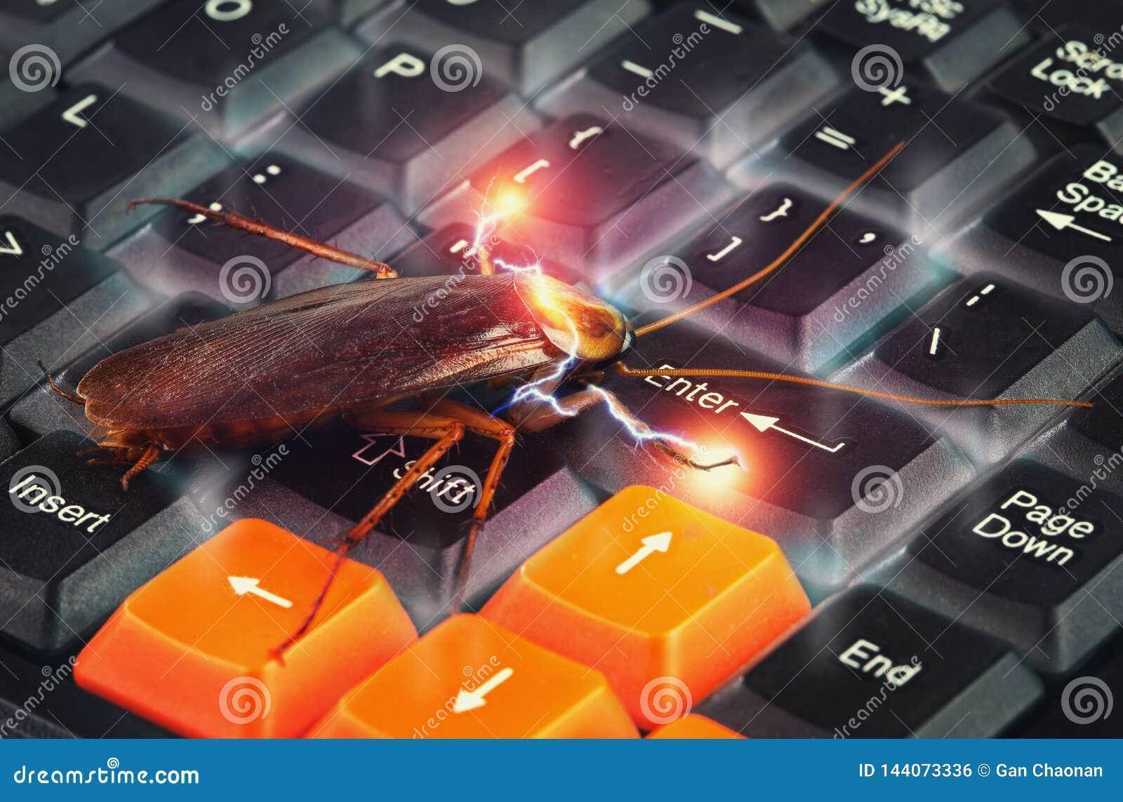 上升在键盘的蟑螂提出关于从病毒攻击的计算机