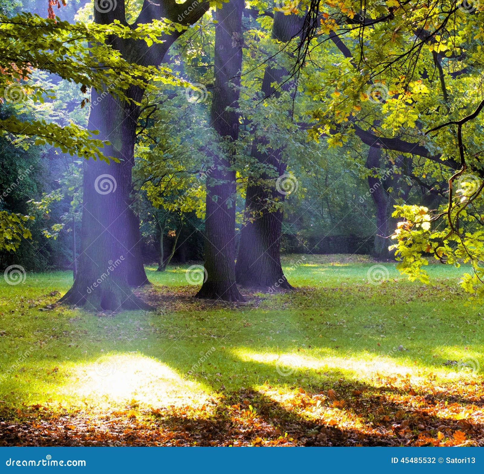上帝射线在公园