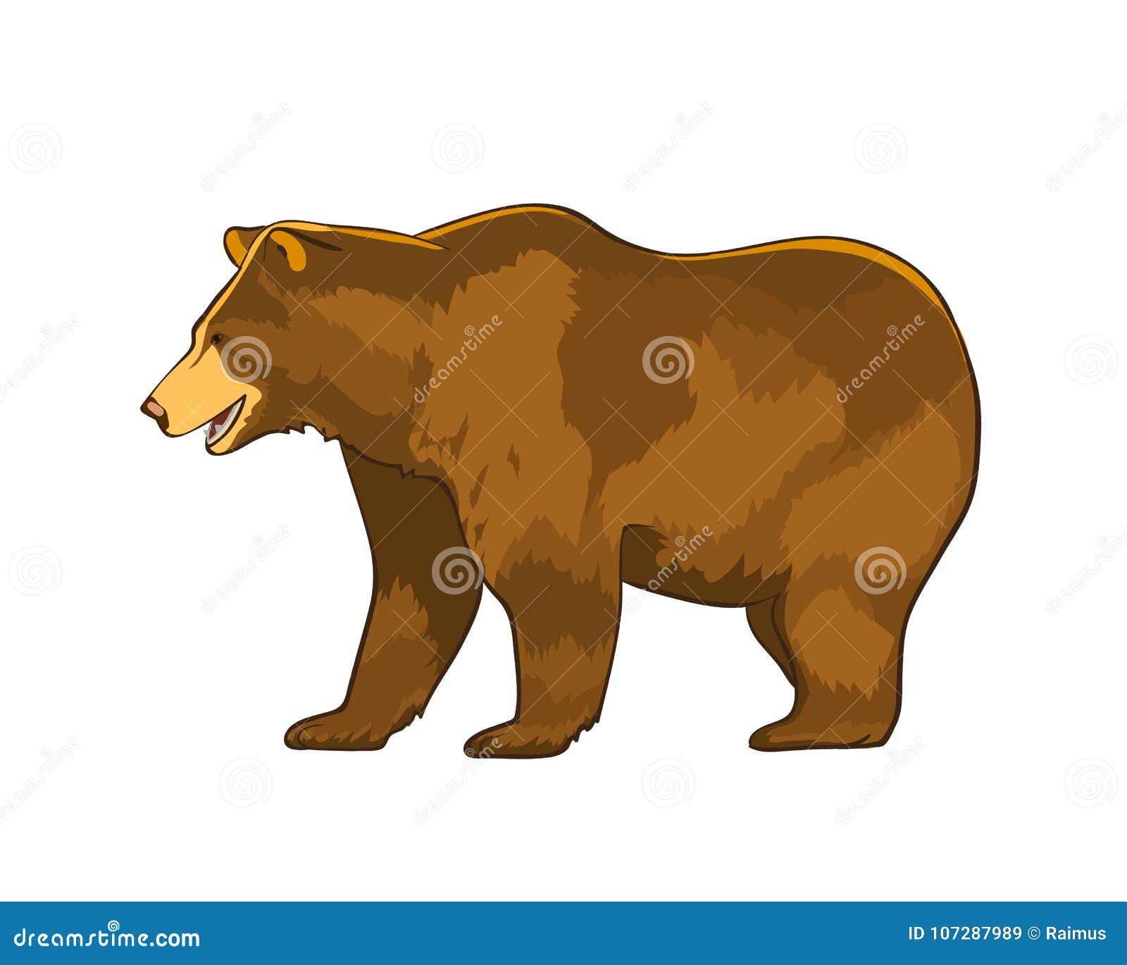 上色熊北美灰熊的传染媒介例证被隔绝在白色背景