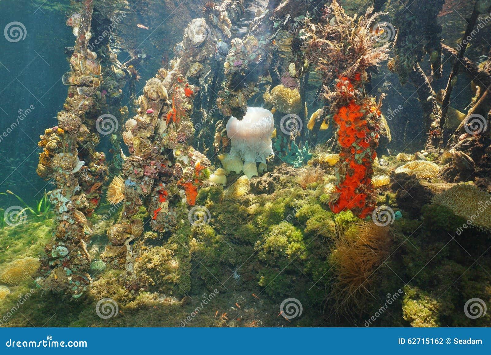 美洲色�_水下的美洲红树根和五颜六色的海洋生物
