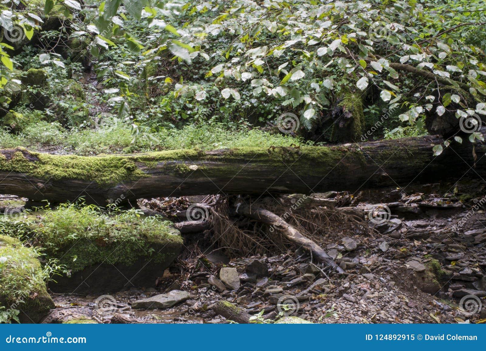 下落的树和小小河
