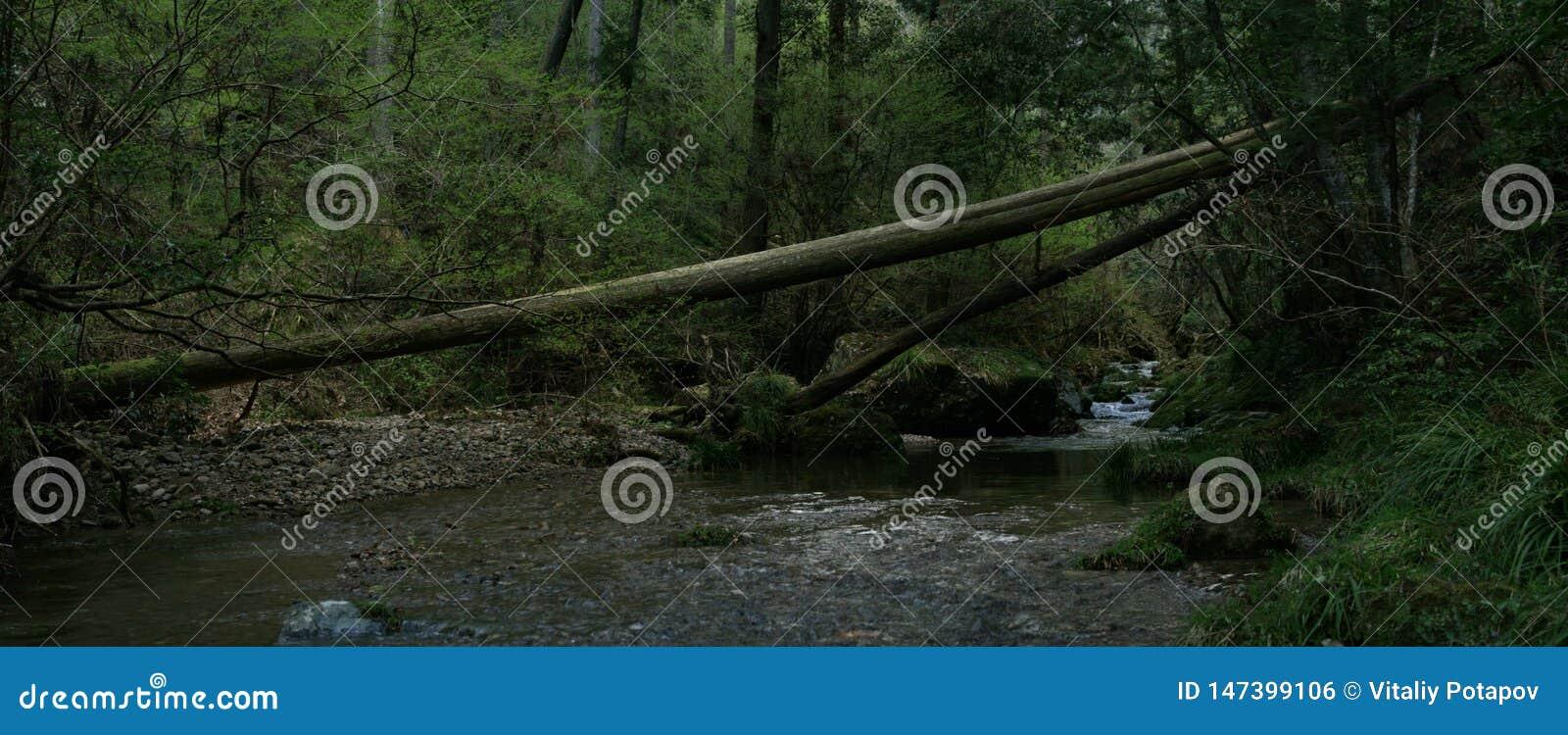 下落的树在横跨河的森林里