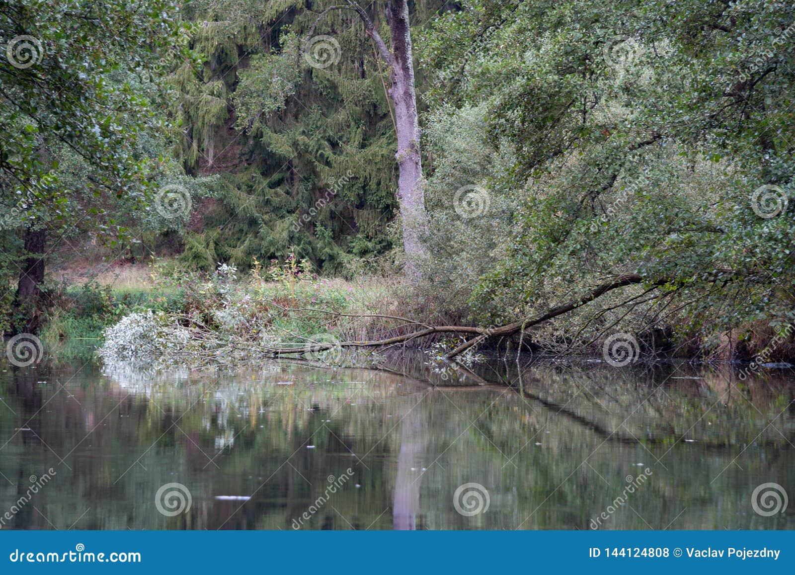 下落的树在河