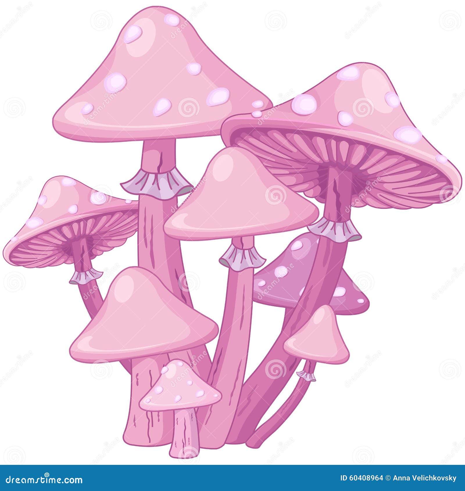 不可思议的伞菌