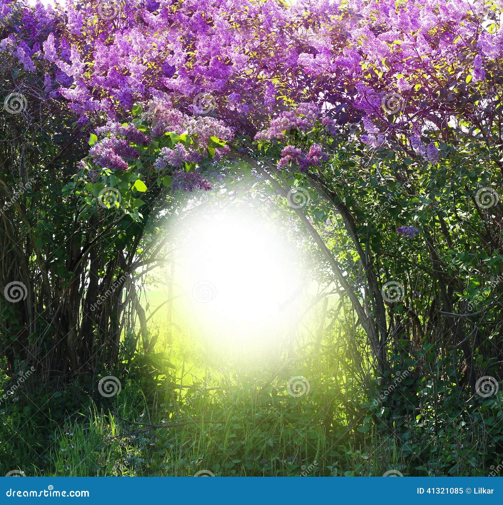 不可思议的春天森林风景