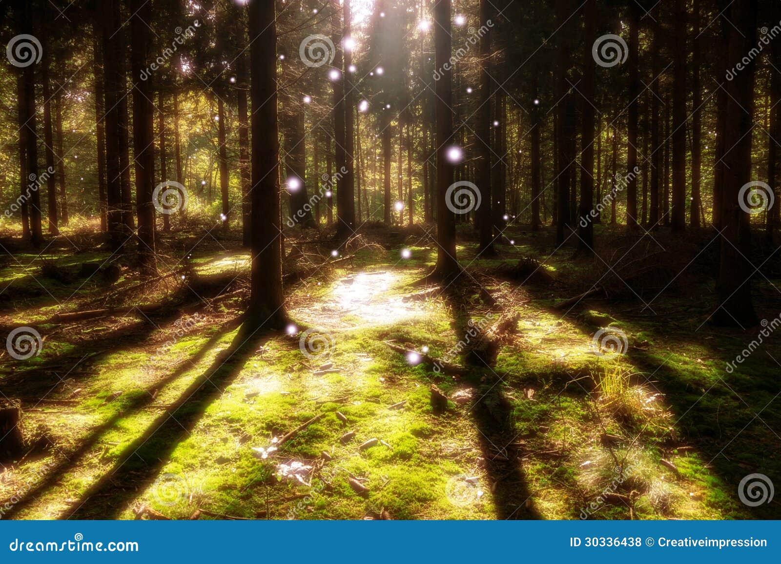 不可思议的森林