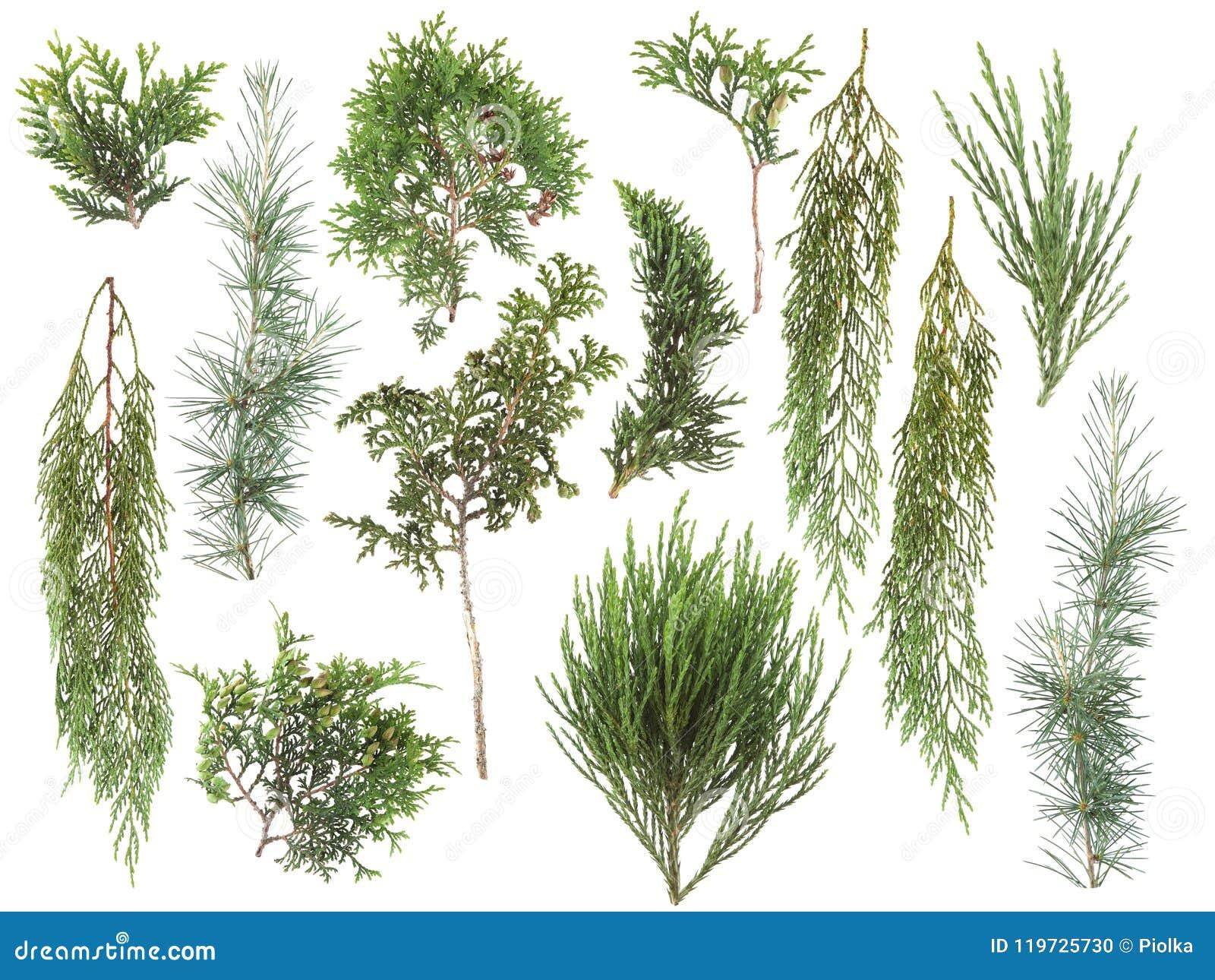 種類 針葉樹 針葉樹とは?種類や庭木のおすすめは?
