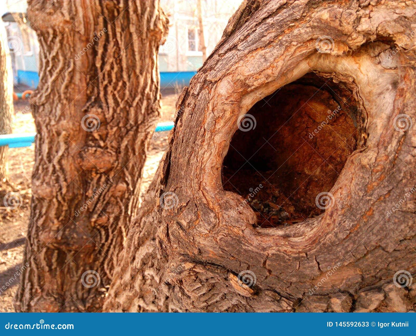 与一个深凹陷的树