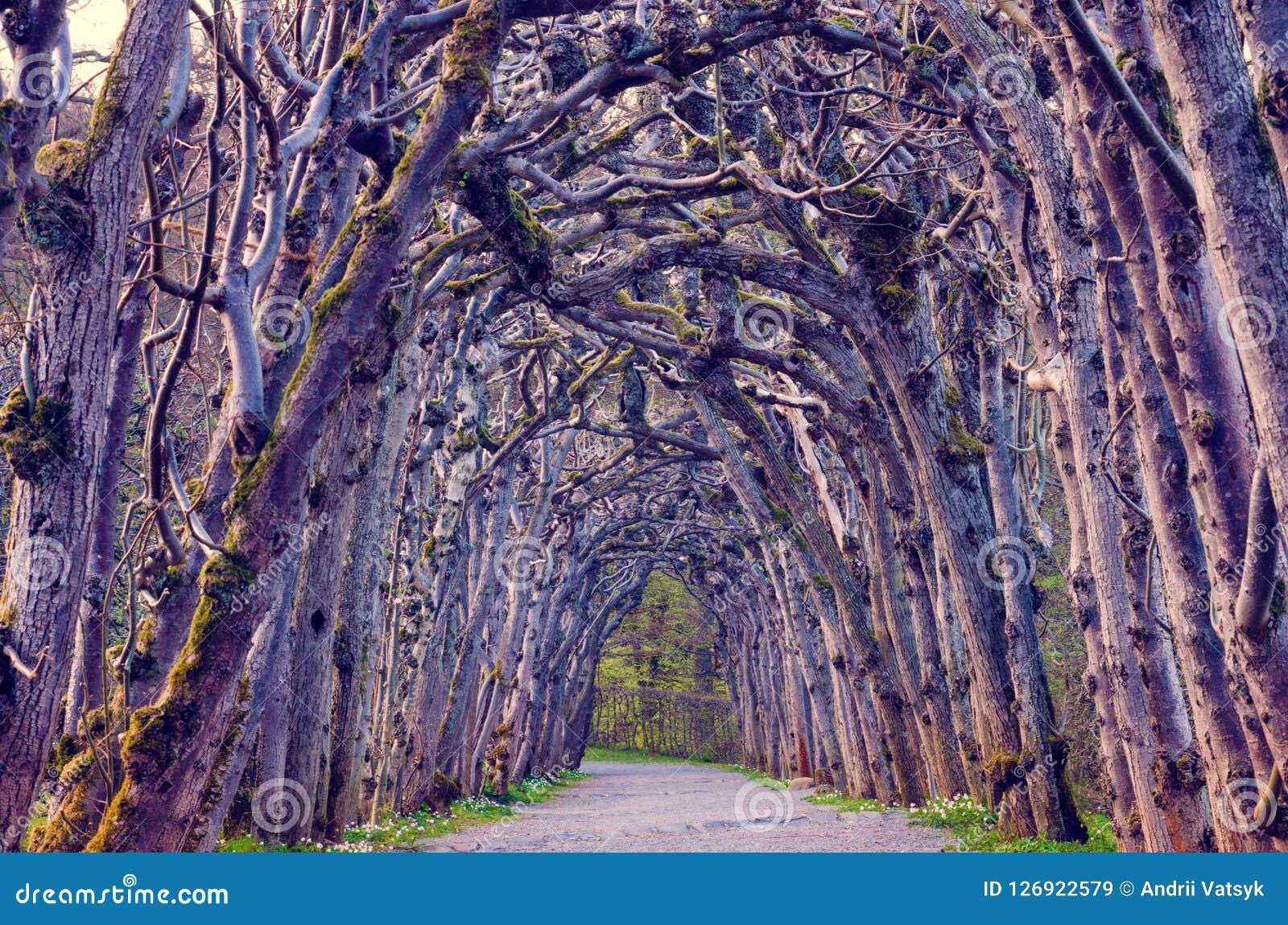 与一个神秘的胡同,树曲拱的不可思议的蠕动的风景